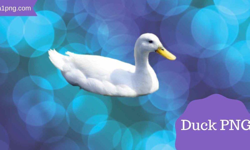 [Best 79+] Duck PNG » HD Transparent Background