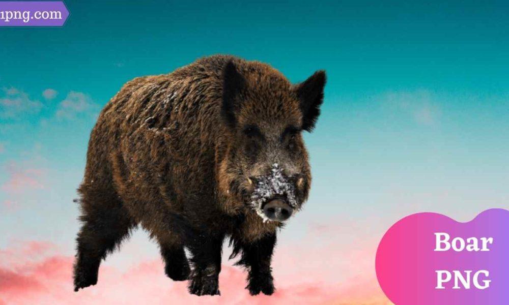 [Best 55+] Boar PNG » Hd Transparent Background