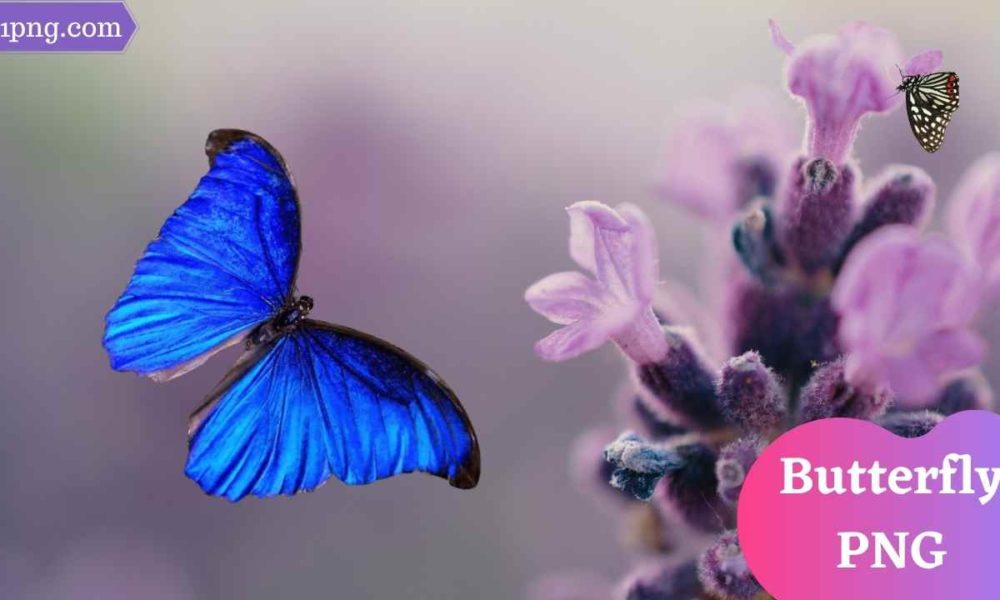 [Best 75+] Butterfly PNG » Hd Transparent Background