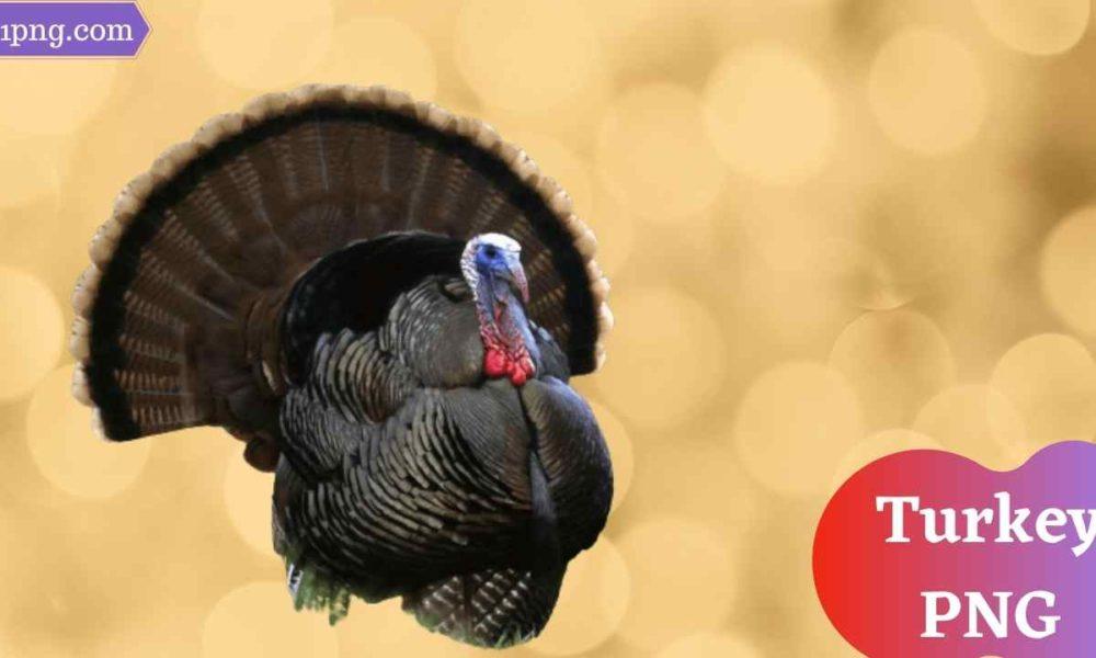 [Best 66+] Turkey PNG » Hd Transparent Background