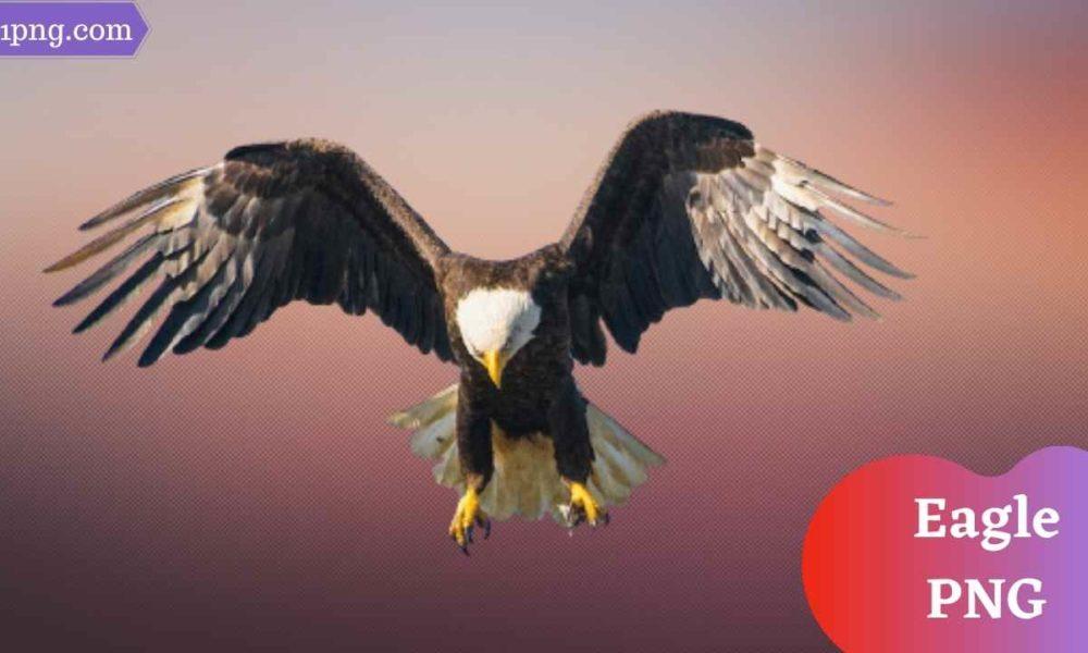 [Best 81+] Eagle PNG » Hd Transparent Background