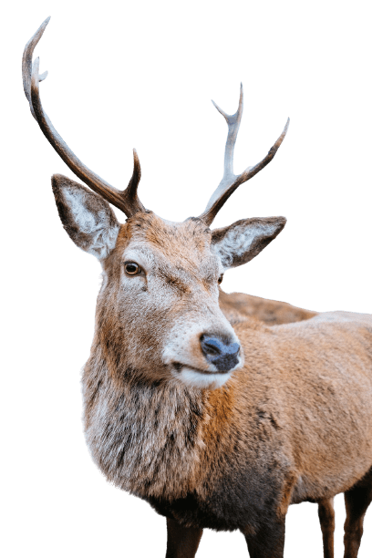 elk png