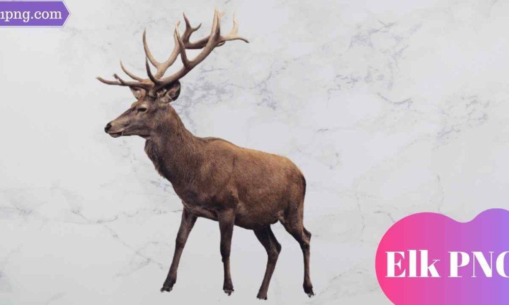 [Best 69+] Elk PNG » Hd Transparent Background