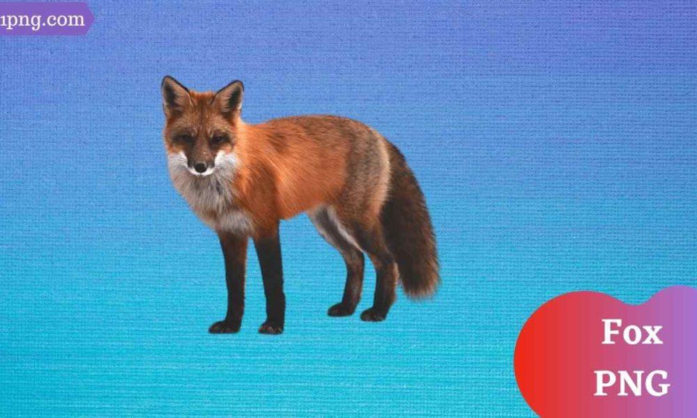 [Best 51+] Fox PNG » Hd Transparent Background