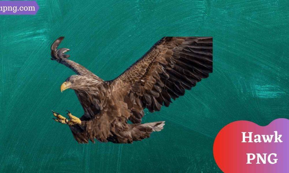 [Best 49+] Hawk PNG » Hd Transparent Background