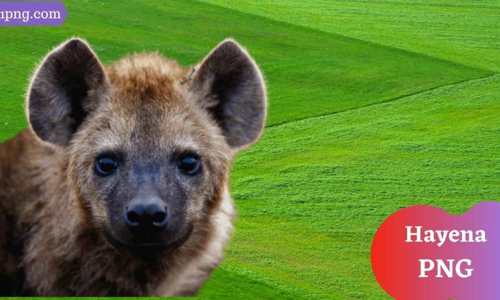 [Best 66+] Hyena PNG » Hd Transparent Background