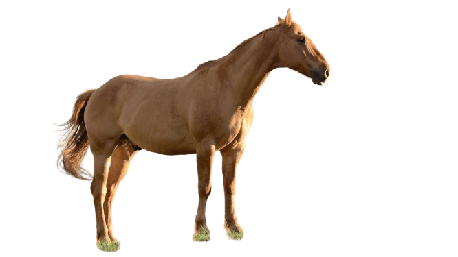 mare png