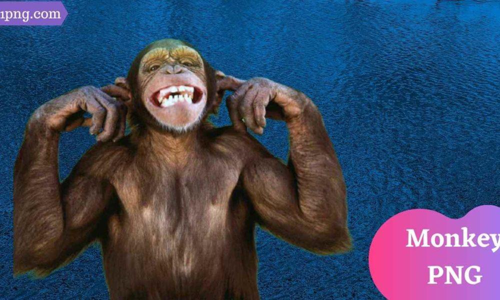 [Best 59+] Monkey PNG » Hd Transparent Background