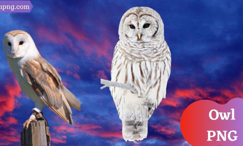 [Best 87+]Owl PNG » Hd Transparent Background