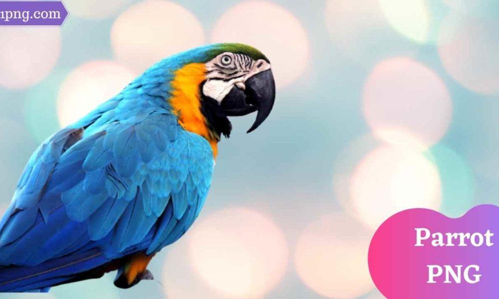 [Best 99+] Parrot PNG » Hd Transparent Background