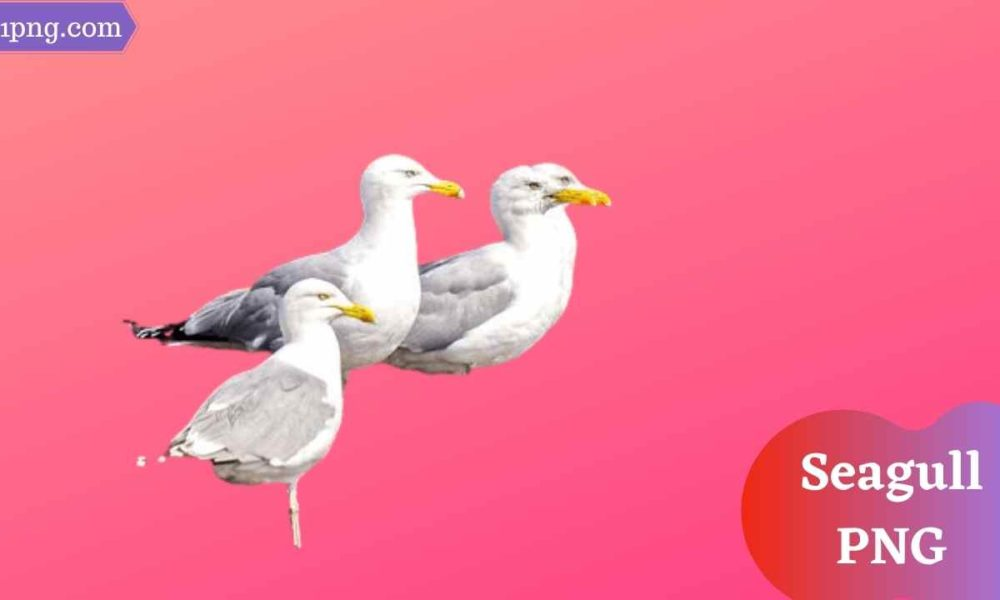[Best 77+] Seagull PNG » Hd Transparent Background
