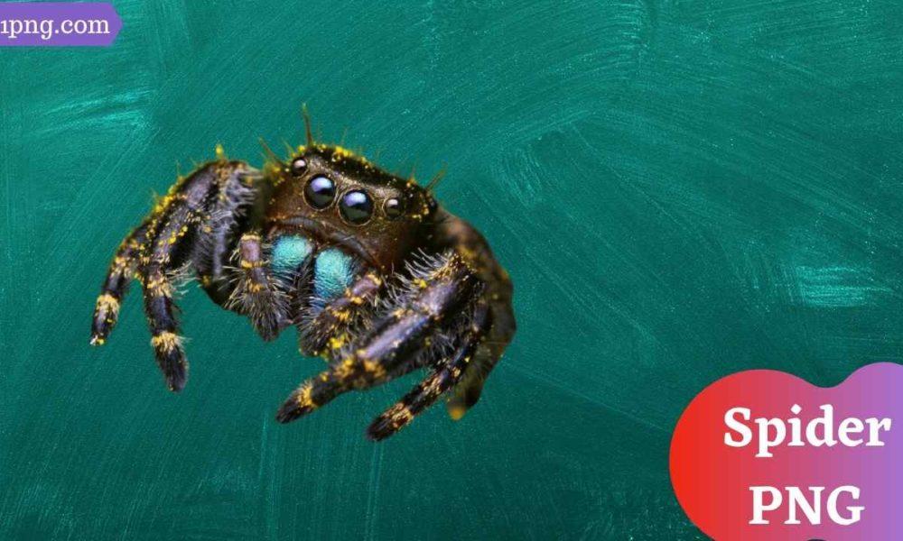 [Best 67+] Spider PNG » Hd Transparent Background