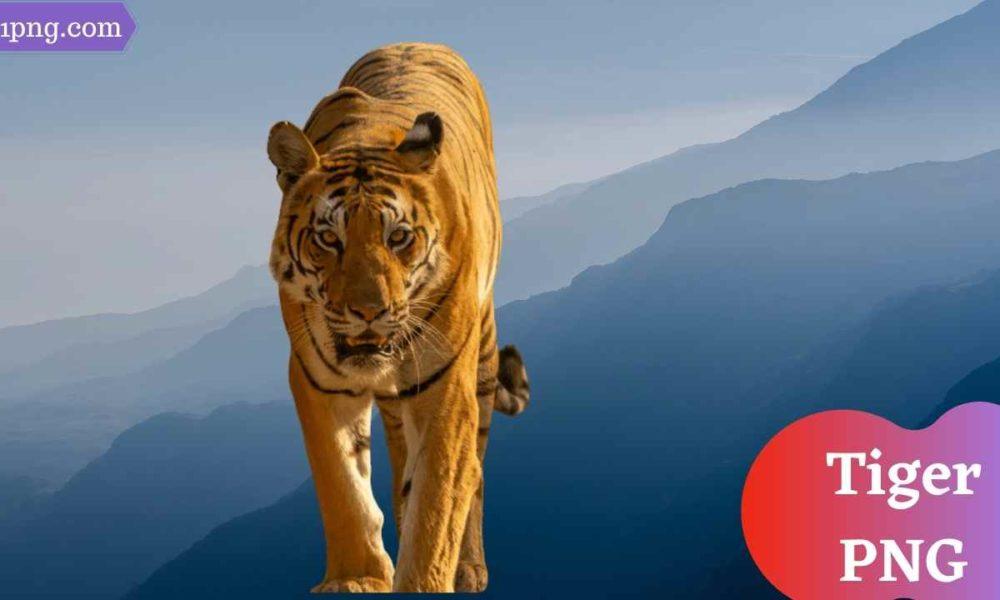 [Best 111+] Tiger PNG » Hd Transparent Background